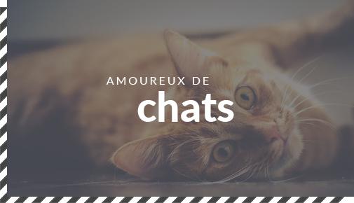 Guides cadeaux pour les amoureux de chats